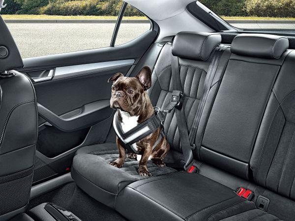 Cinturón Seguridad para perros - PUNTA TACÓN TV