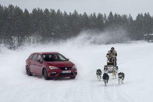SEAT León CUPRA frente a 6 Huskies - PUNTA TACÓN TV