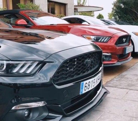 IV Mustang Day - Punta Tacon